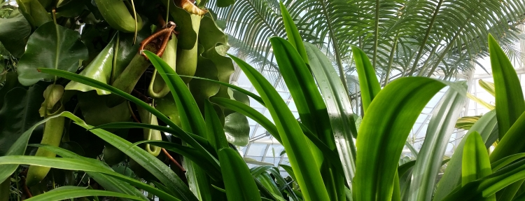 San Francisco Botanic Garden, shot inside the tropical greenhouse of ferns and palms